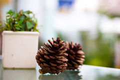 Ciérrese encima de nuez de pino Imágenes de archivo libres de regalías