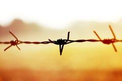 Ciérrese encima de púas oxidado con luz del sol del oro Imagenes de archivo
