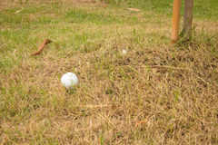Ciérrese encima de pelota de golf sucia Imagenes de archivo