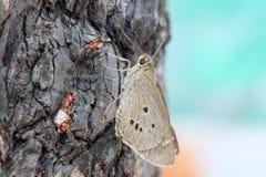 Ciérrese encima de polilla en el árbol Imagen de archivo