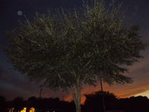 Ciérrese encima de puesta del sol colorida del árbol Floridian fotos de archivo libres de regalías