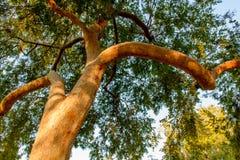 Ciérrese encima de rama de árbol en luz de oro de la mañana Fotografía de archivo