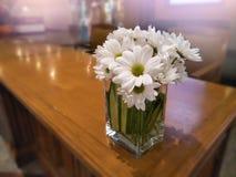 Ciérrese encima de ramo de la margarita en florero en la tabla para el sitio decorativo y la flor interior, blanca en área de rec Foto de archivo libre de regalías