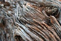 Ciérrese encima de remolino de la corteza Foto de archivo libre de regalías