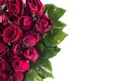 Ciérrese encima de rosas rojas naturales y de descensos del agua Tarjeta de felicitación con rosas rojas y espacio para el texto  Imagenes de archivo