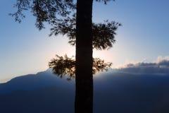 Ciérrese encima de sihouette del árbol Imagen de archivo libre de regalías