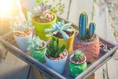 Ciérrese encima de Succulents en fondo del día de fiesta del paisaje de los potes Foto de archivo