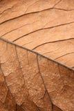 Ciérrese encima de textura del fondo de la hoja marrón Fotos de archivo