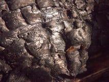 ciérrese encima de textura negra de agrietado brillante carbonizada quemada del carbón de leña del bosque del tocón de árbol fotos de archivo libres de regalías
