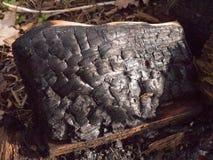 ciérrese encima de textura negra del carbón de leña carbonizado quemado del bosque del tocón de árbol fotos de archivo libres de regalías