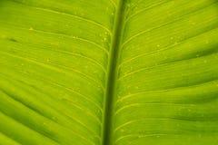Ciérrese encima de textura y de fondo verdes de la naturaleza del detalle de la hoja Fotos de archivo libres de regalías