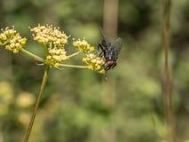 Ciérrese encima de tiro de la flor amarilla y vuele Tiro macro Fotos de archivo libres de regalías