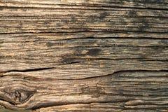 Ciérrese encima de tocón de árbol en el salvaje Imágenes de archivo libres de regalías