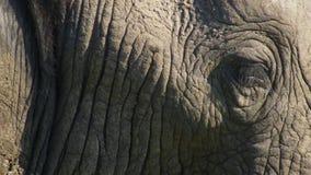 Ciérrese encima de un elefante de toro africano, sabana, África fotografía de archivo