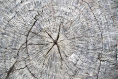 Ciérrese encima de viejo fondo del extracto del árbol del anillo anual Imagenes de archivo