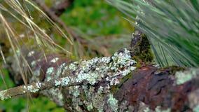 Ciérrese encima de vista de una textura del nodo de árbol como cara Fotos de archivo