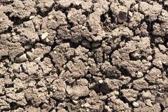 Ciérrese encima de vista del suelo seco fértil texturizado en jardín Imagen de archivo libre de regalías