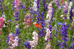 Ciérrese encima de Wildflowers Foto de archivo libre de regalías