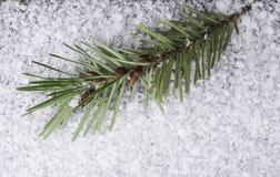 Ciérrese encima del abeto de douglas con las semillas en nieve Fotos de archivo libres de regalías