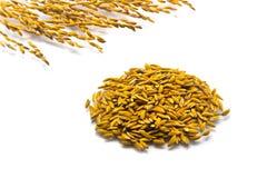 Ciérrese encima del arroz de arroz Fotos de archivo