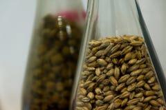 Ciérrese encima del arroz de la malta o de la cebada en botella Como primer medio para el aprendizaje imagen de archivo