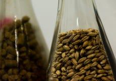 Ciérrese encima del arroz de la malta o de la cebada en botella Como primer medio para el aprendizaje imagen de archivo libre de regalías