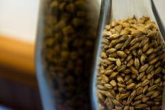 Ciérrese encima del arroz de la malta o de la cebada en botella Como primer medio para el aprendizaje foto de archivo