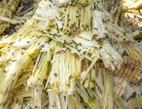 Ciérrese encima del bagazo de la pila de la caña de azúcar y de la abeja Imagen de archivo