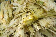 Ciérrese encima del bagazo de la pila de la caña de azúcar y de la abeja Fotos de archivo