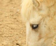 Ciérrese encima del caballo principal Imágenes de archivo libres de regalías