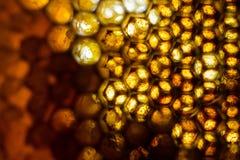 Ciérrese encima del estudio tirado de la miel orgánica Imagen de archivo