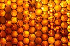 Ciérrese encima del estudio tirado de la miel orgánica Fotos de archivo