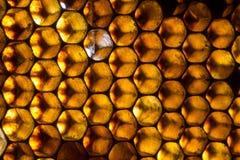 Ciérrese encima del estudio tirado de la miel orgánica Imágenes de archivo libres de regalías