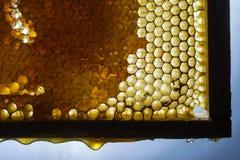Ciérrese encima del estudio tirado de la miel orgánica Fotografía de archivo
