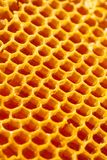 Ciérrese encima del estudio tirado de la miel orgánica auténtica en el panal - comida sana Imagenes de archivo