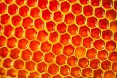 Ciérrese encima del estudio tirado de la miel orgánica auténtica en el panal - concepto sano de la consumición Imagen de archivo libre de regalías