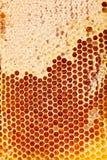 Ciérrese encima del estudio tirado de la miel orgánica auténtica en panal Fotos de archivo
