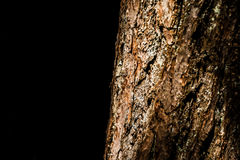 Ciérrese encima del extracto del detalle de la corteza de árbol en fondo negro foto de archivo libre de regalías
