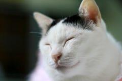 Ciérrese encima del gato blanco Fotos de archivo libres de regalías