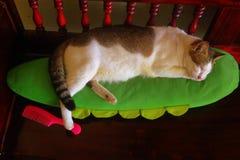 Ciérrese encima del gato de calicó que duerme feliz en la almohada verde con un pie que camina en el peine rosado foto de archivo libre de regalías