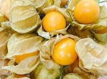 Ciérrese encima del grupo de fruta de la grosella espinosa de cabo Foto de archivo libre de regalías