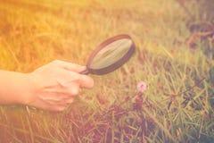 Ciérrese encima del human& x27; naturaleza de exploración de la mano de s en la flor con magnificar Foto de archivo libre de regalías