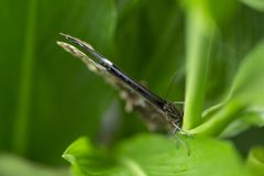 Ciérrese encima del lanzamiento de la mariposa con el fondo verde suave Fotografía de archivo libre de regalías