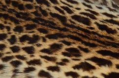 Ciérrese encima del modelo de la piel del leopardo Foto de archivo libre de regalías