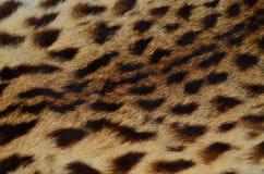 Ciérrese encima del modelo de la piel del leopardo Imagen de archivo