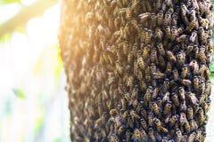 Ciérrese encima del panal de la abeja en el pilar de la pared con el fondo borroso Foto de archivo