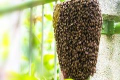 Ciérrese encima del panal de la abeja en el pilar de la pared con el fondo borroso Fotos de archivo