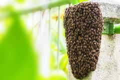 Ciérrese encima del panal de la abeja en el pilar de la pared con el fondo borroso Foto de archivo libre de regalías