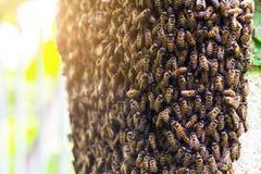 Ciérrese encima del panal de la abeja en el pilar de la pared con el fondo borroso Imagen de archivo libre de regalías