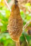 Ciérrese encima del panal no vacian ninguna abeja dentro Fotos de archivo